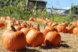 Downtown PBG Fall Events