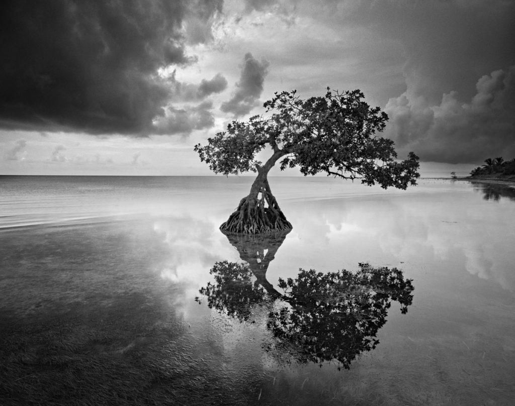The Long Mangrove, Florida Keys, Richard Auger