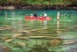 Kayak and snorkel the crystal-clear waters of Three Sisters Springs, photo courtesy Plantation on Crystal River