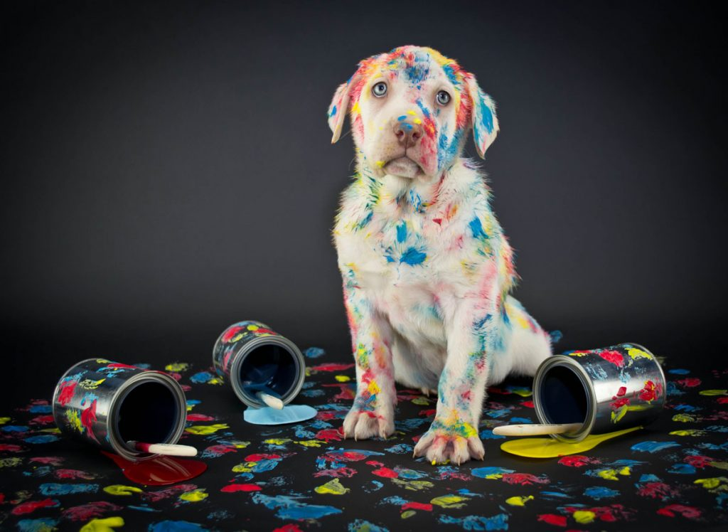Paint with your pup at Arri's Portal.