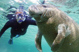 Swim with manatees, photo courtesy of Plantation on Crystal River