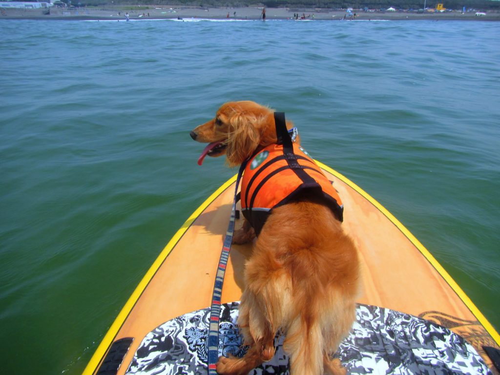 Take your pal for a water cruise atop a paddleboard.