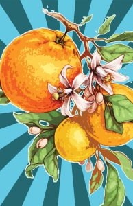Oranges, Emmanuel Gonzales
